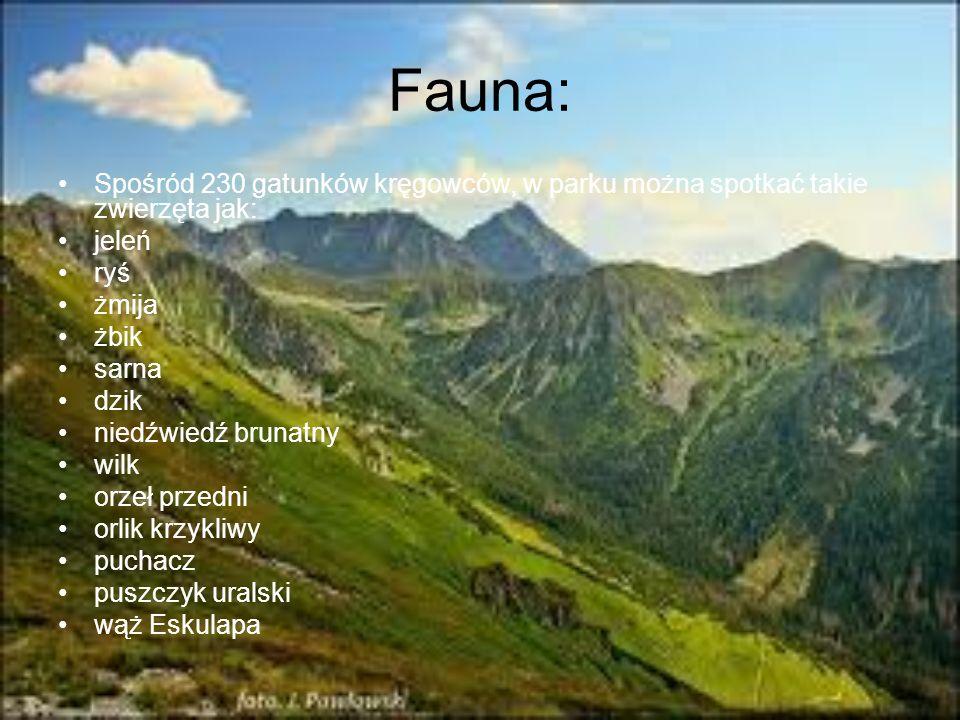 Fauna:Spośród 230 gatunków kręgowców, w parku można spotkać takie zwierzęta jak: jeleń. ryś. żmija.