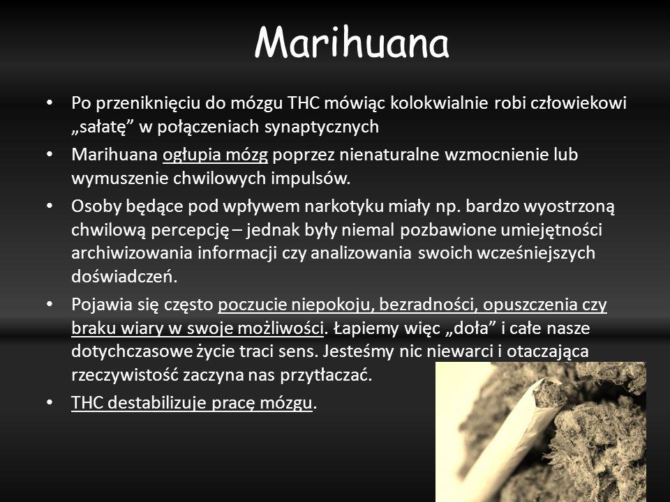 """Marihuana Po przeniknięciu do mózgu THC mówiąc kolokwialnie robi człowiekowi """"sałatę w połączeniach synaptycznych."""