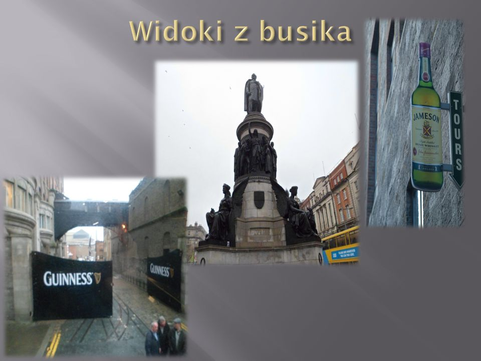 Widoki z busika