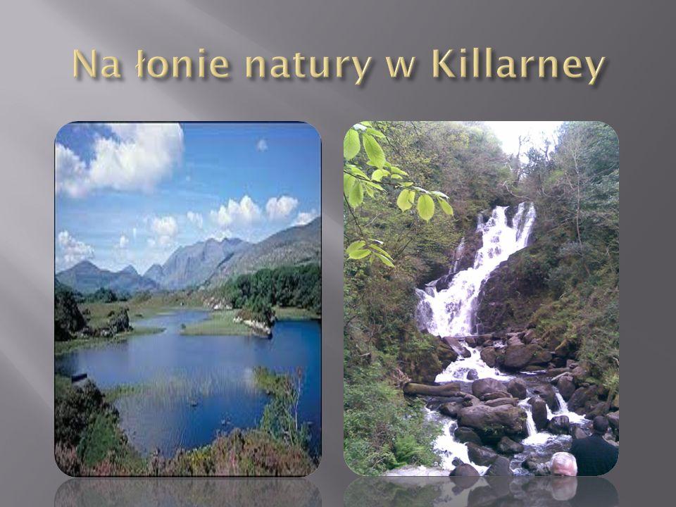 Na łonie natury w Killarney