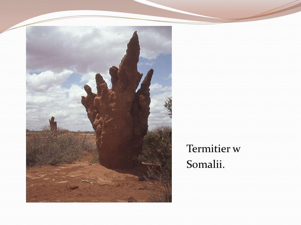 Termitier w Somalii.