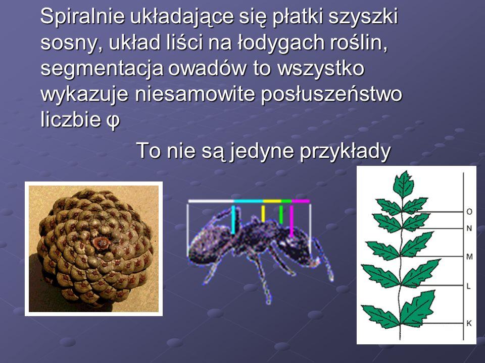 Spiralnie układające się płatki szyszki sosny, układ liści na łodygach roślin, segmentacja owadów to wszystko wykazuje niesamowite posłuszeństwo liczbie φ