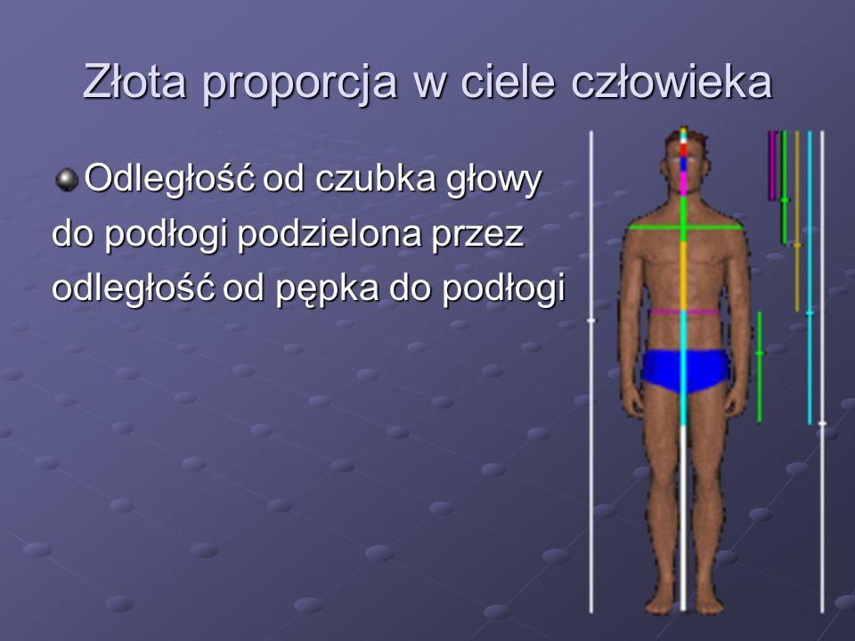 Złota proporcja w ciele człowieka