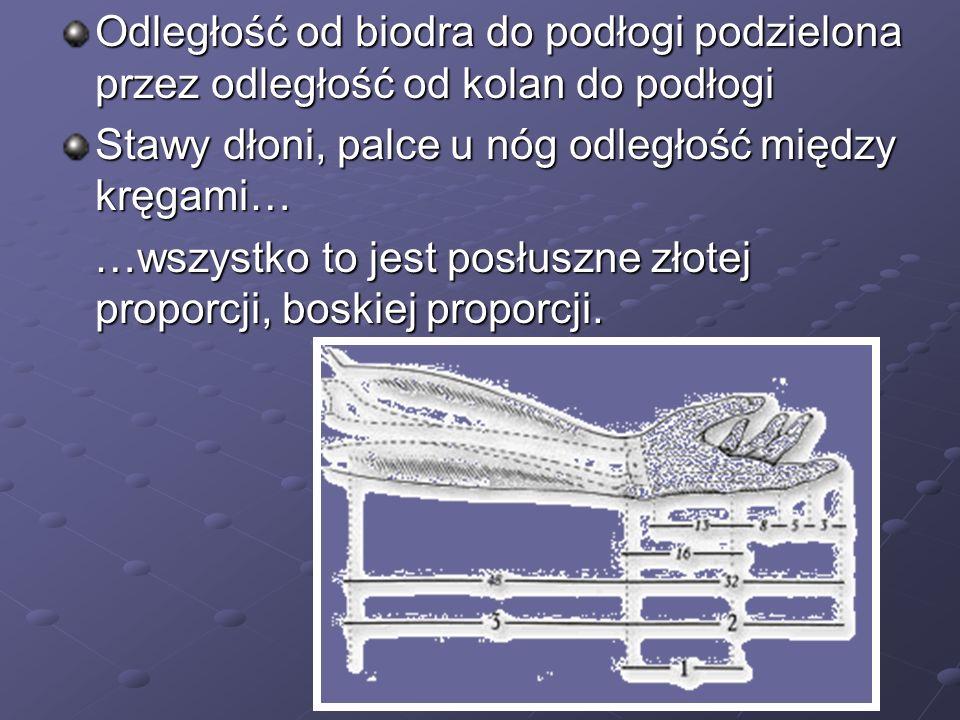 Odległość od biodra do podłogi podzielona przez odległość od kolan do podłogi