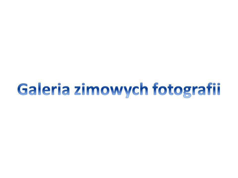 Galeria zimowych fotografii