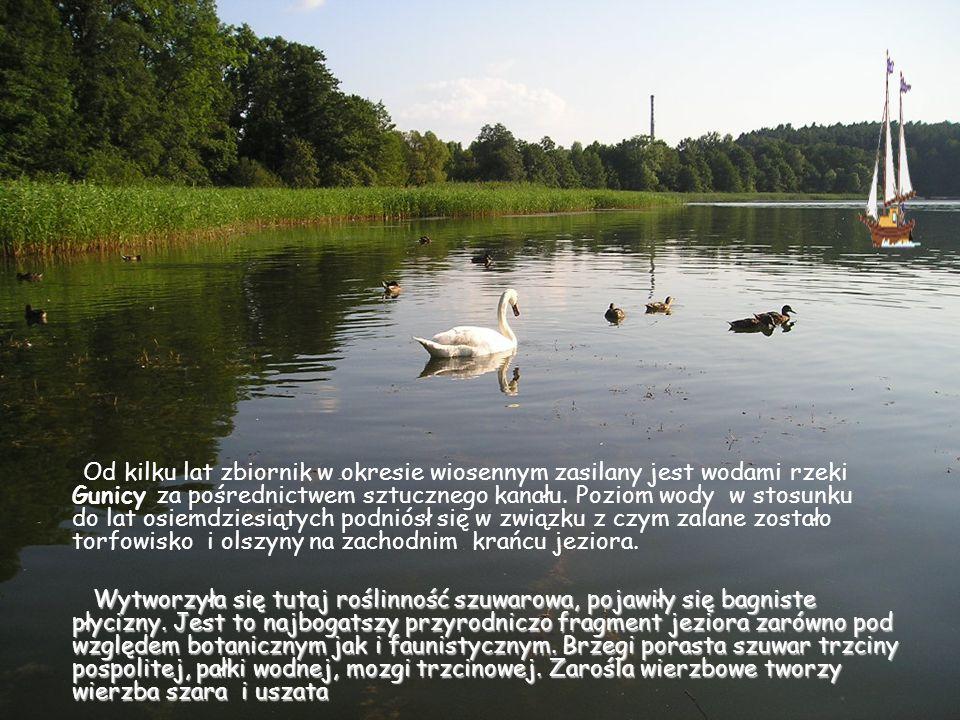 Od kilku lat zbiornik w okresie wiosennym zasilany jest wodami rzeki Gunicy za pośrednictwem sztucznego kanału. Poziom wody w stosunku do lat osiemdziesiątych podniósł się w związku z czym zalane zostało torfowisko i olszyny na zachodnim krańcu jeziora.