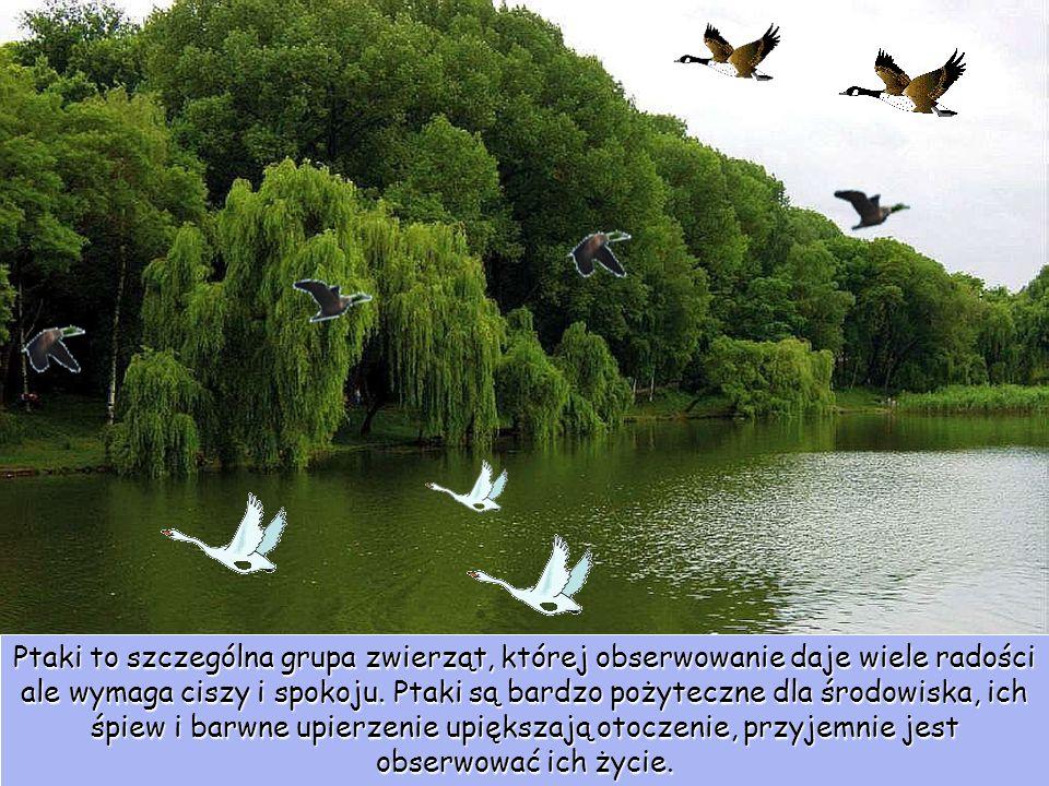 Ptaki to szczególna grupa zwierząt, której obserwowanie daje wiele radości ale wymaga ciszy i spokoju.
