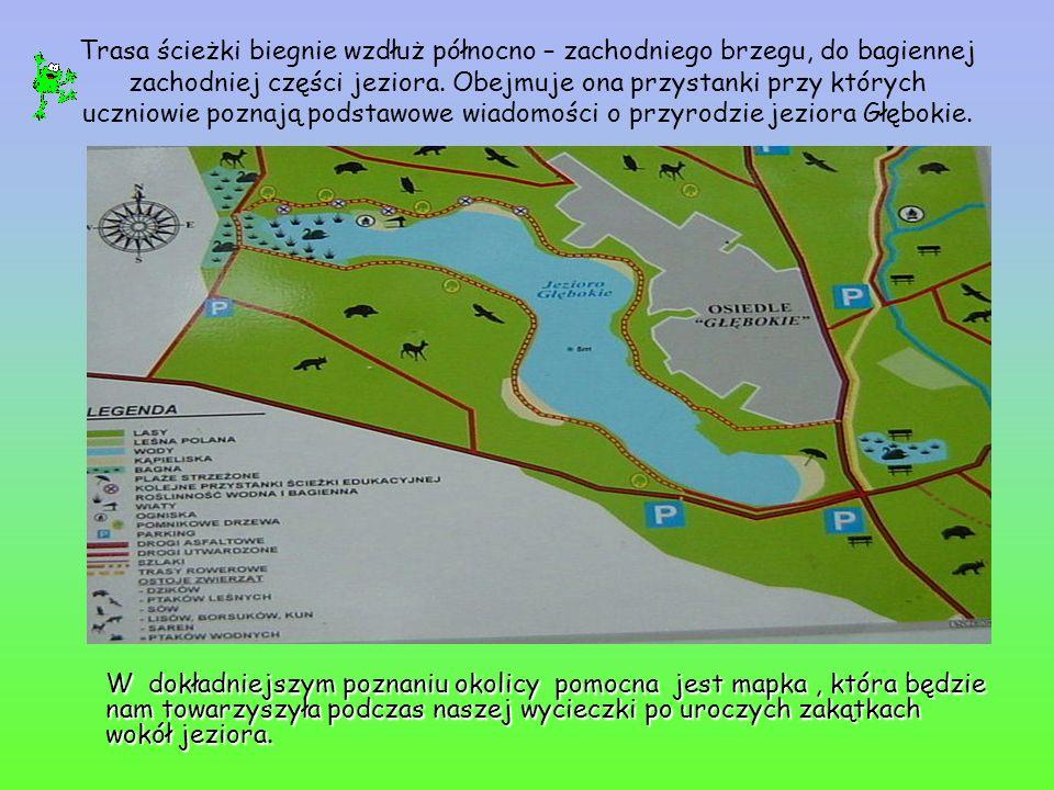 Trasa ścieżki biegnie wzdłuż północno – zachodniego brzegu, do bagiennej zachodniej części jeziora. Obejmuje ona przystanki przy których uczniowie poznają podstawowe wiadomości o przyrodzie jeziora Głębokie.