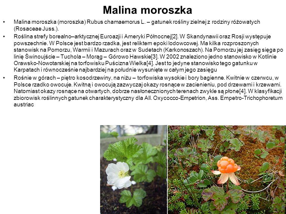 Malina moroszka Malina moroszka (moroszka) Rubus chamaemorus L. – gatunek rośliny zielnej z rodziny różowatych (Rosaceae Juss.).