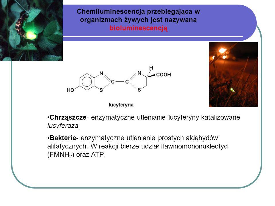Chemiluminescencja przebiegająca w organizmach żywych jest nazywana bioluminescencją