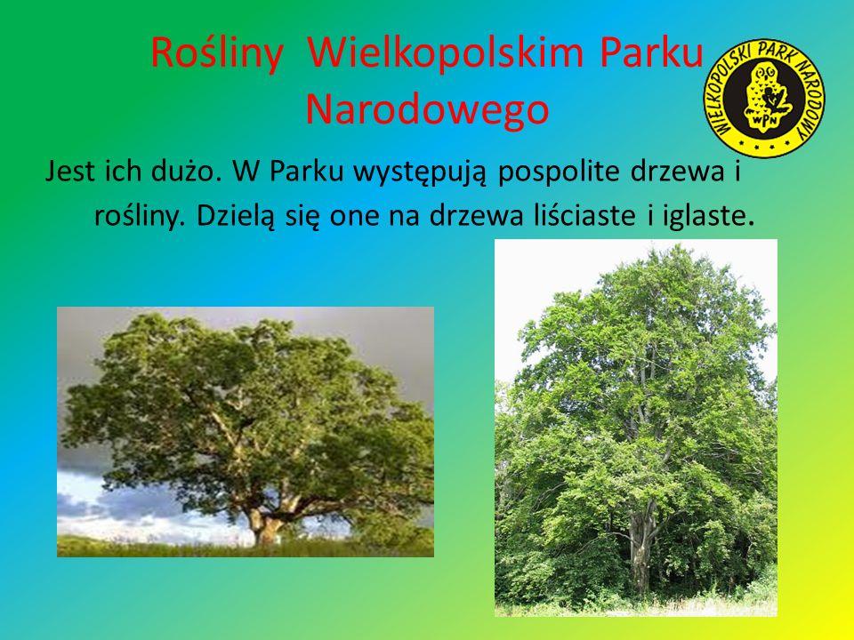 Rośliny Wielkopolskim Parku Narodowego