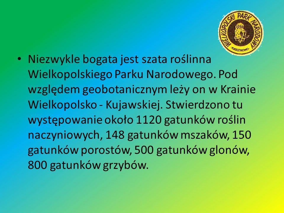 Niezwykle bogata jest szata roślinna Wielkopolskiego Parku Narodowego