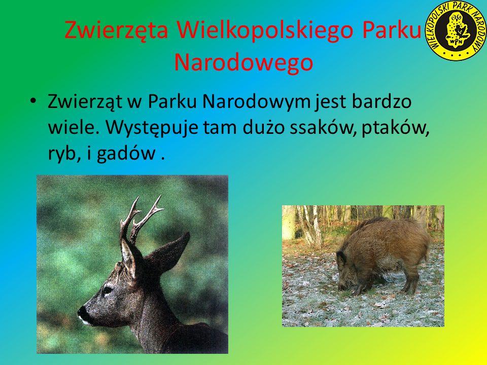 Zwierzęta Wielkopolskiego Parku Narodowego