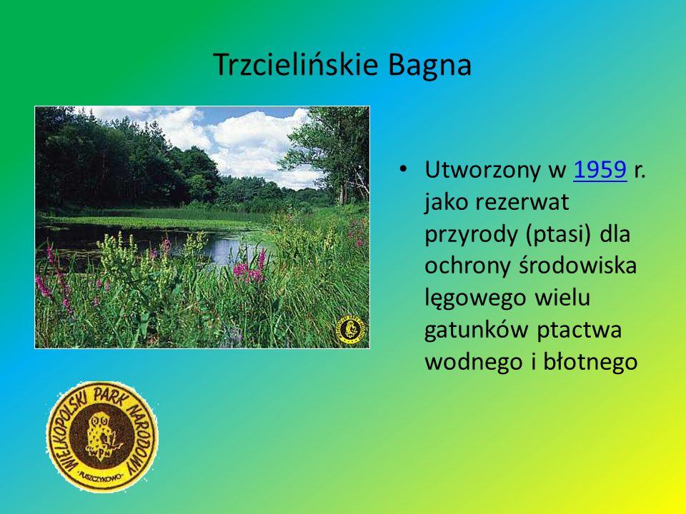 Trzcielińskie BagnaUtworzony w 1959 r.