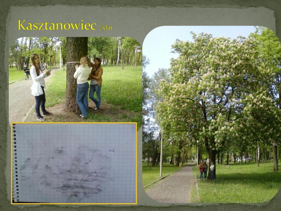 Kasztanowiec 75 lat