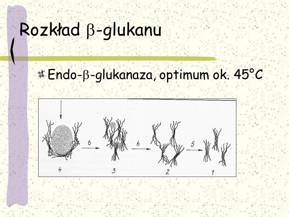 Rozkład b-glukanu Endo-b-glukanaza, optimum ok. 45°C