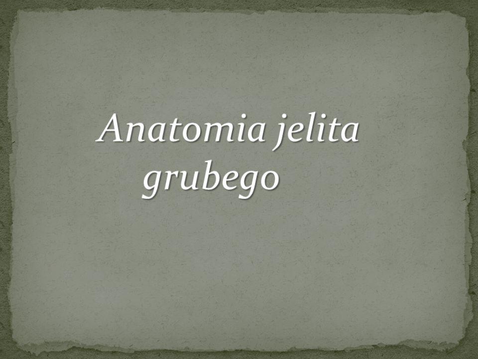 Anatomia jelita grubego