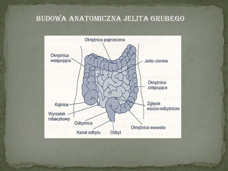 Budowa anatomiczna jelita grubego