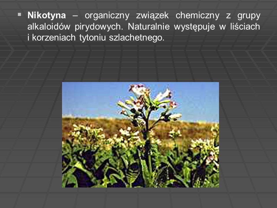 Nikotyna – organiczny związek chemiczny z grupy alkaloidów pirydowych