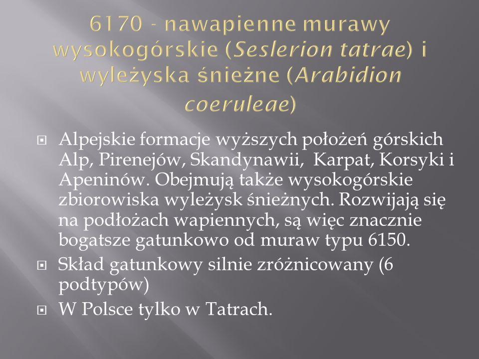 6170 - nawapienne murawy wysokogórskie (Seslerion tatrae) i wyleżyska śnieżne (Arabidion coeruleae)