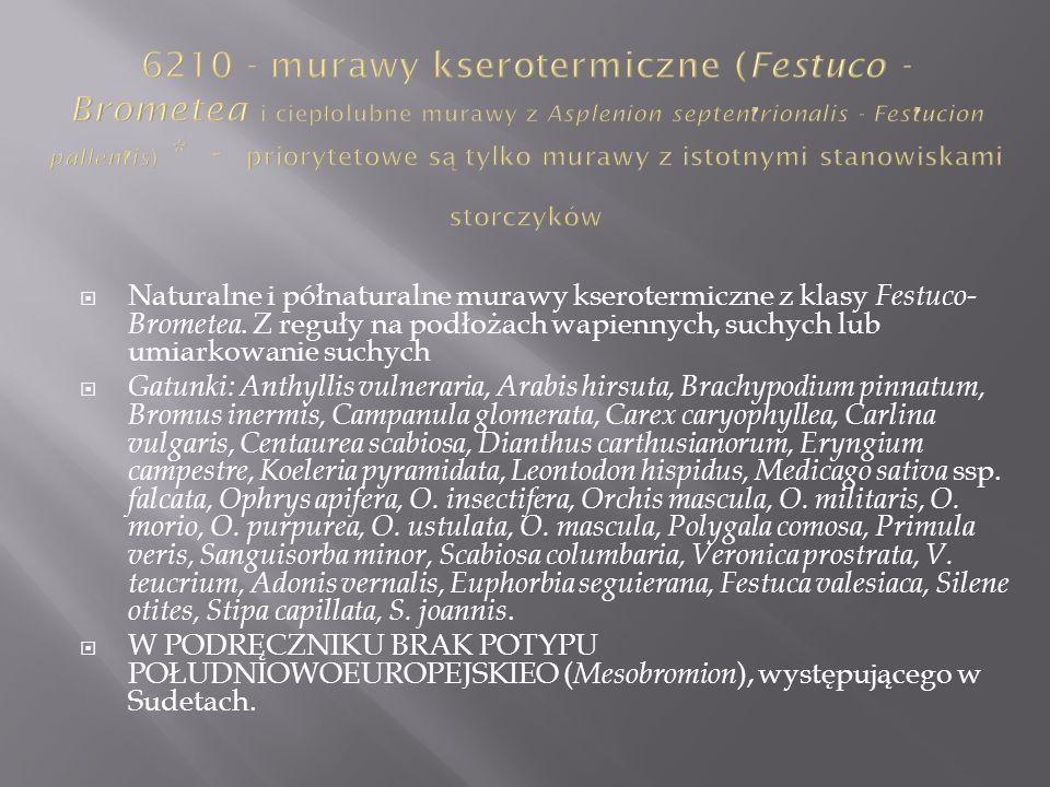 6210 - murawy kserotermiczne (Festuco - Brometea i ciepłolubne murawy z Asplenion septentrionalis - Festucion pallentis) * - priorytetowe są tylko murawy z istotnymi stanowiskami storczyków