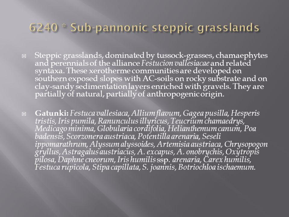 6240 * Sub-pannonic steppic grasslands
