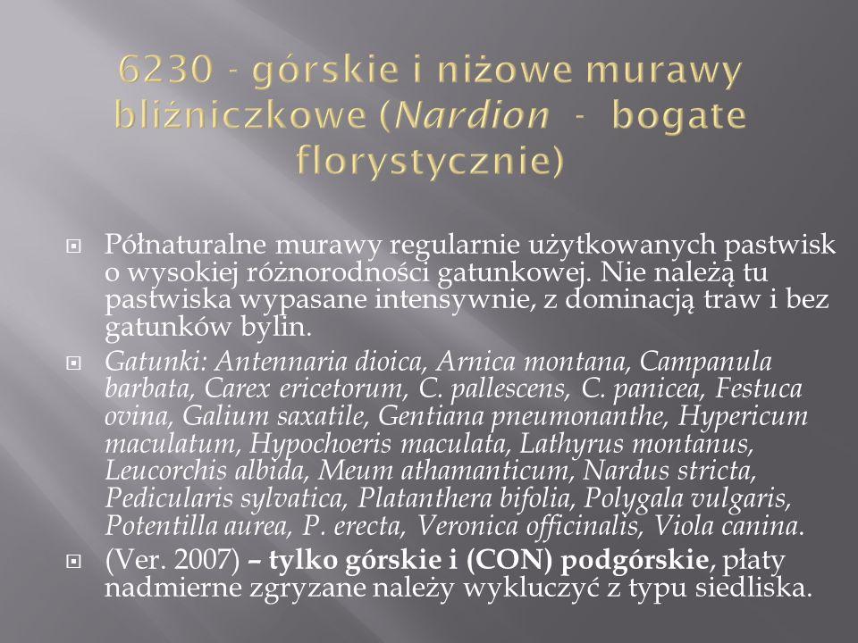 6230 - górskie i niżowe murawy bliźniczkowe (Nardion - bogate florystycznie)