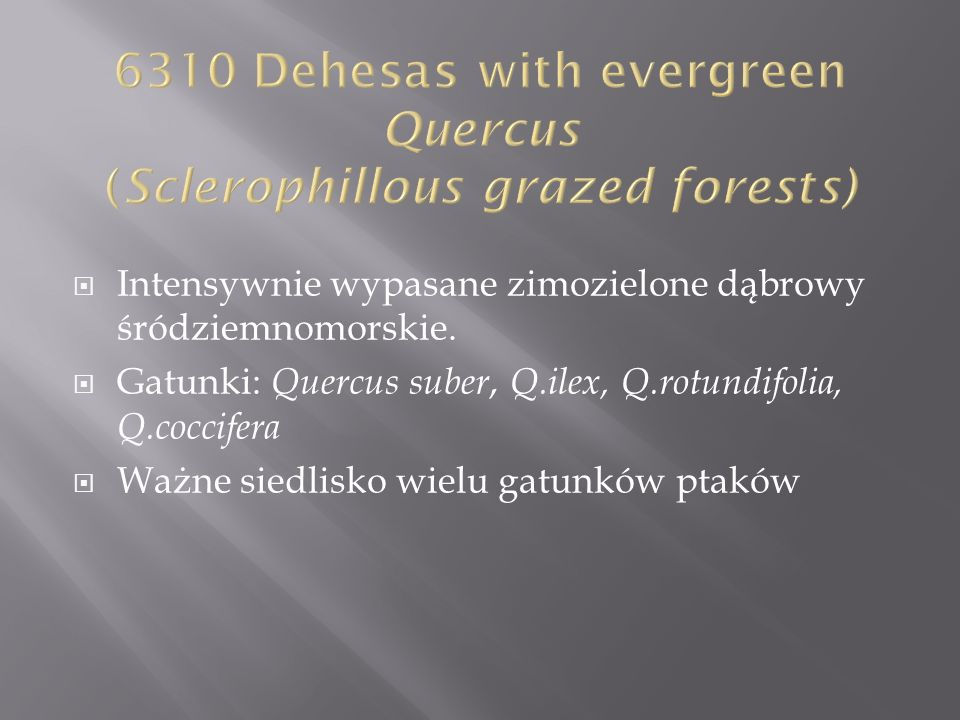6310 Dehesas with evergreen Quercus (Sclerophillous grazed forests)
