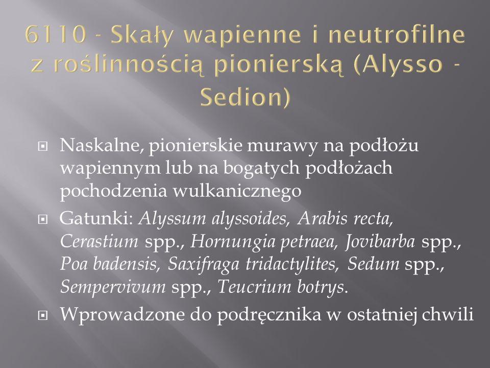 6110 - Skały wapienne i neutrofilne z roślinnością pionierską (Alysso - Sedion)