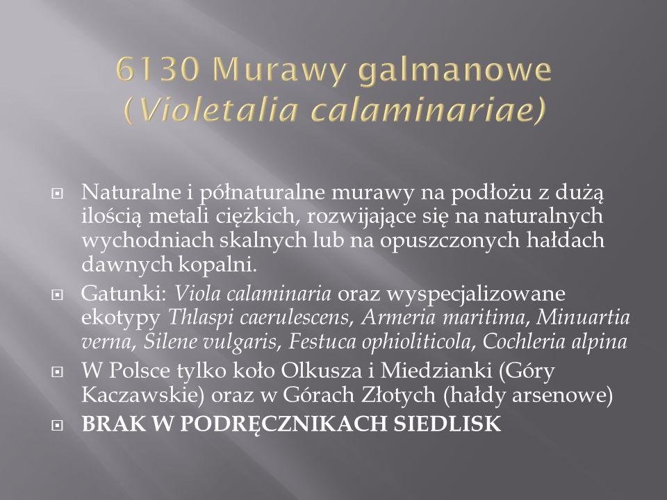 6130 Murawy galmanowe (Violetalia calaminariae)