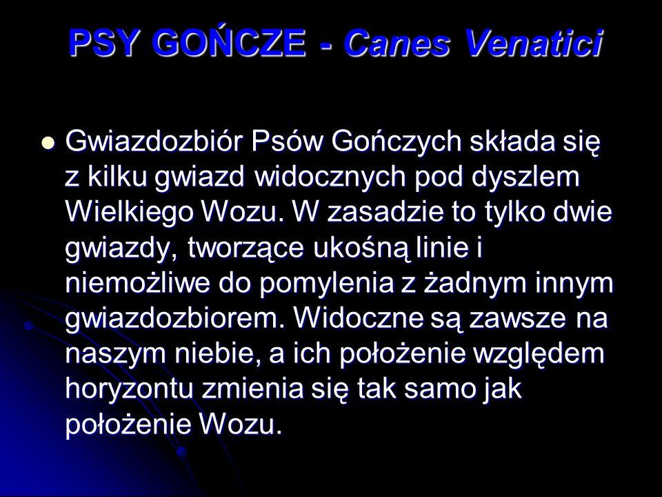 PSY GOŃCZE - Canes Venatici