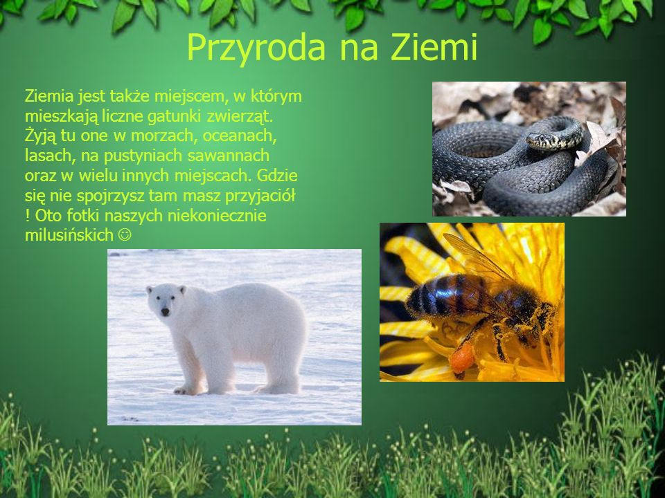 Przyroda na Ziemi