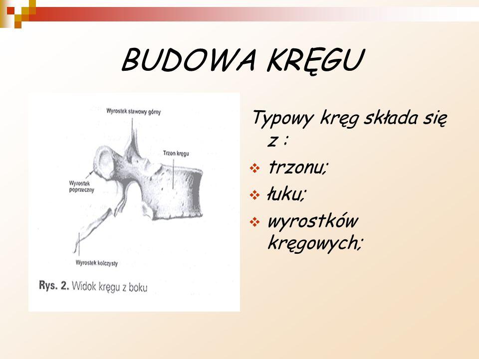 BUDOWA KRĘGU Typowy kręg składa się z : trzonu; łuku;