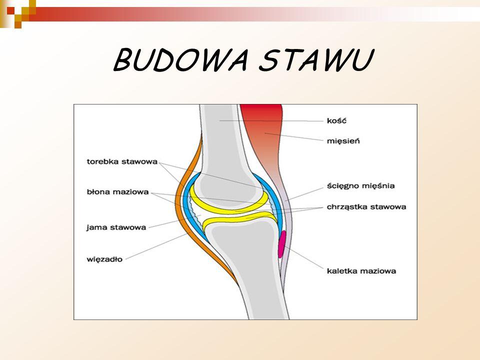 BUDOWA STAWU