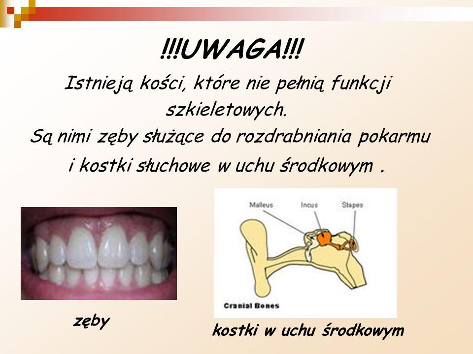!!!UWAGA!!! Istnieją kości, które nie pełnią funkcji szkieletowych.