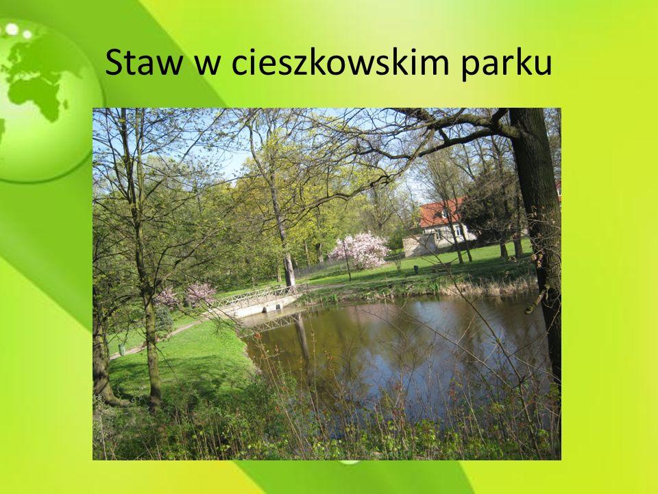 Staw w cieszkowskim parku