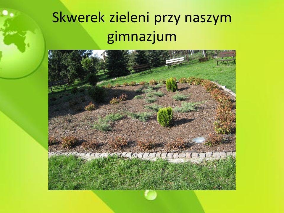 Skwerek zieleni przy naszym gimnazjum