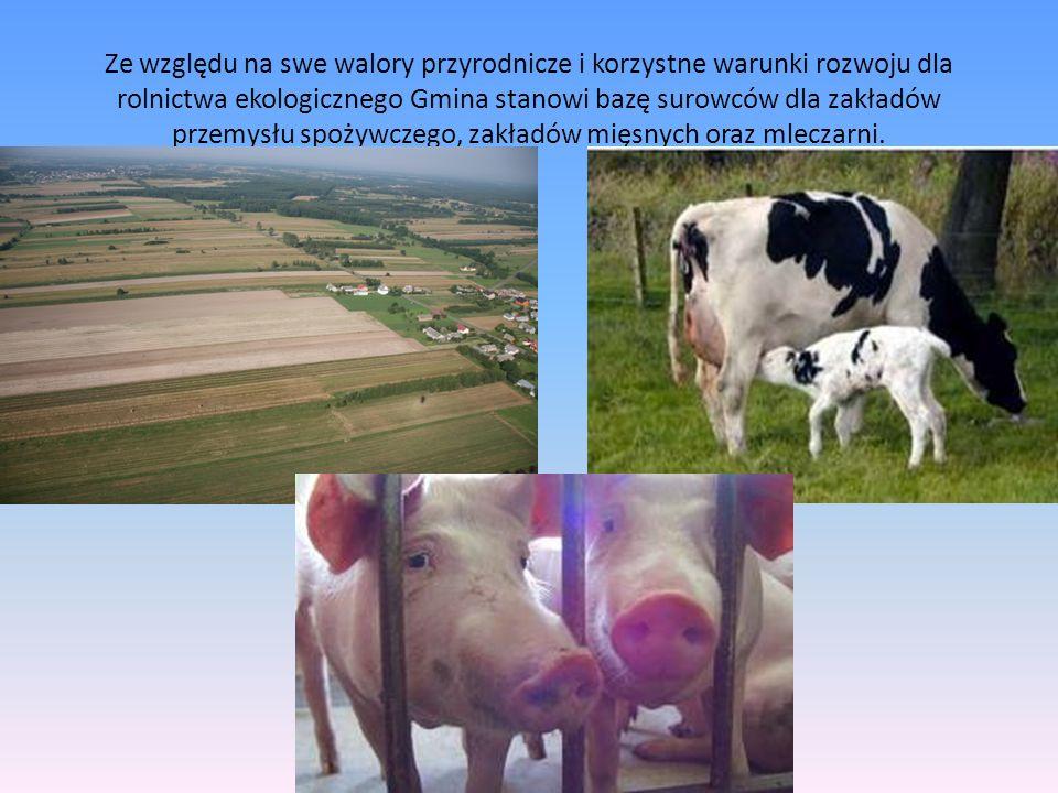 Ze względu na swe walory przyrodnicze i korzystne warunki rozwoju dla rolnictwa ekologicznego Gmina stanowi bazę surowców dla zakładów przemysłu spożywczego, zakładów mięsnych oraz mleczarni.