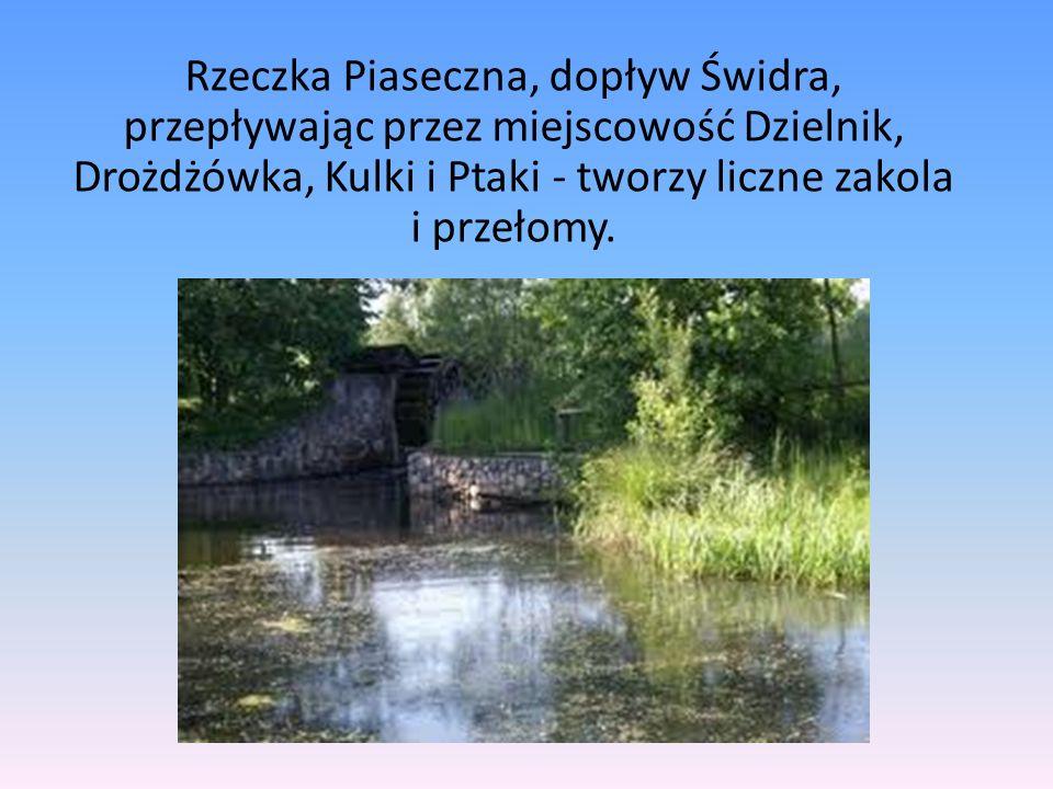 Rzeczka Piaseczna, dopływ Świdra, przepływając przez miejscowość Dzielnik, Drożdżówka, Kulki i Ptaki - tworzy liczne zakola i przełomy.