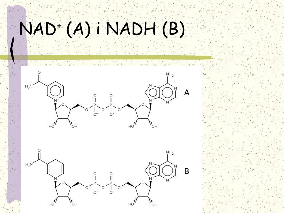 NAD+ (A) i NADH (B)