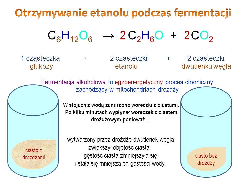 Otrzymywanie etanolu podczas fermentacji