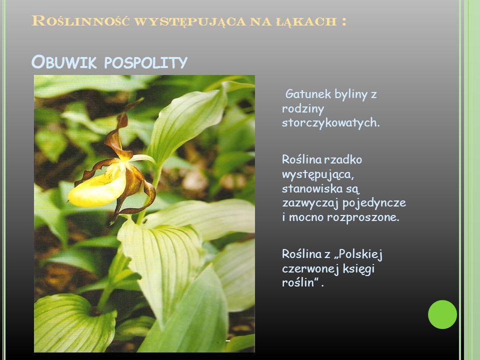 Roślinność występująca na łąkach : Obuwik pospolity