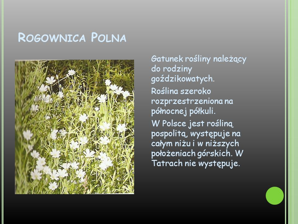 Rogownica Polna