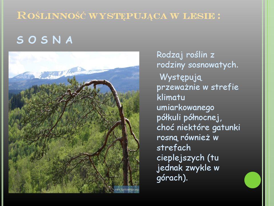Roślinność występująca w lesie : S O S N A