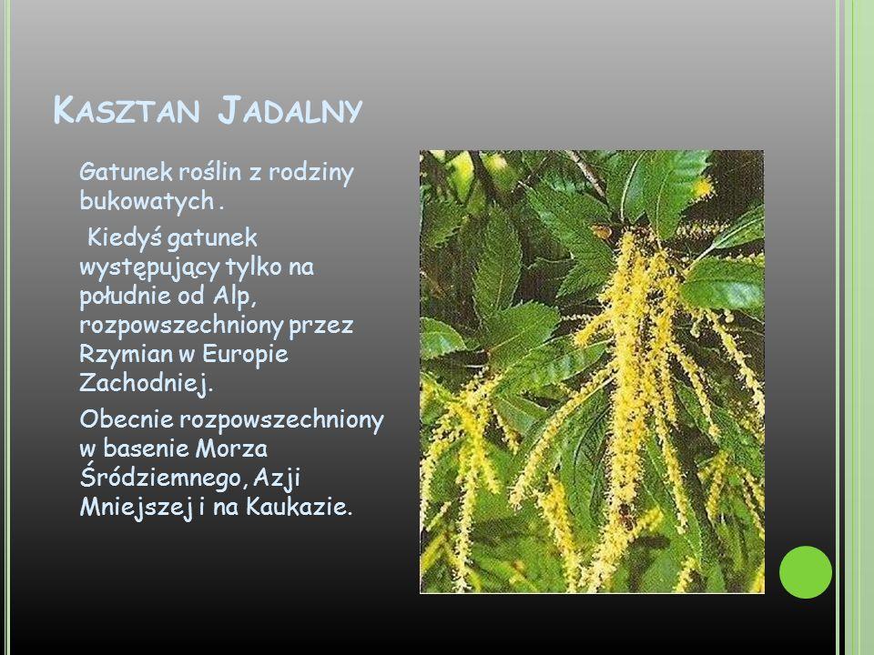 Kasztan Jadalny