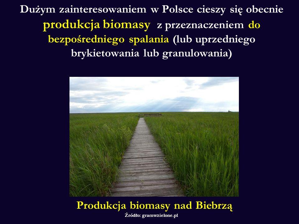 Produkcja biomasy nad Biebrzą Źródło: gramwzielone.pl