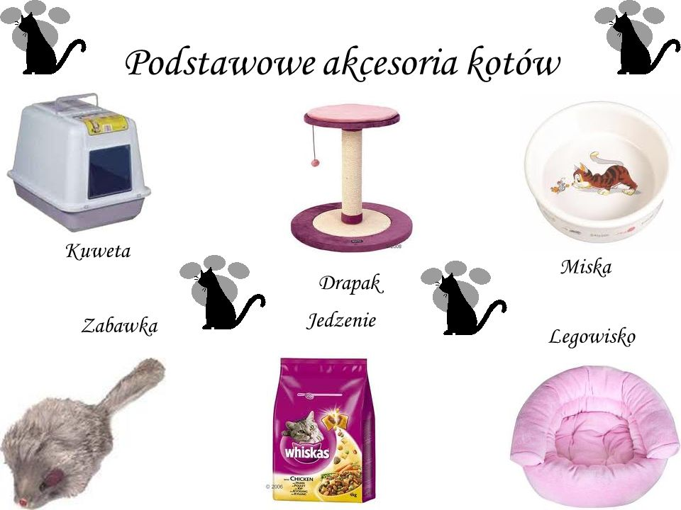 Podstawowe akcesoria kotów