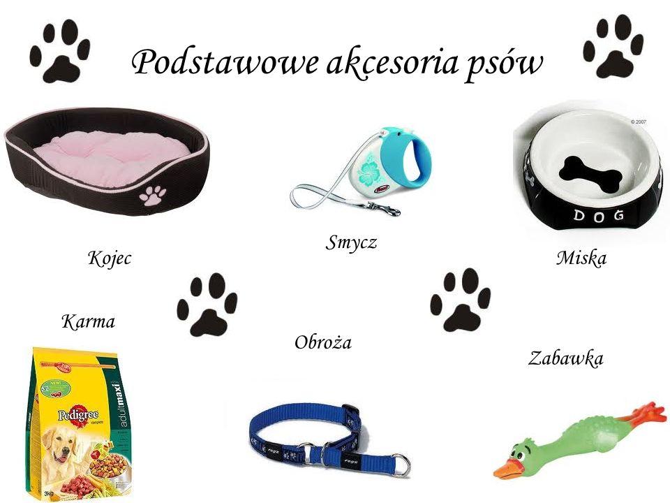 Podstawowe akcesoria psów