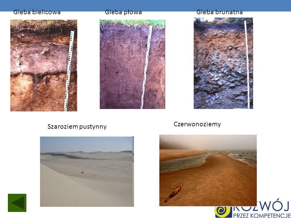 Gleba bielicowa Gleba płowa Gleba brunatna Czerwonoziemy Szaroziem pustynny