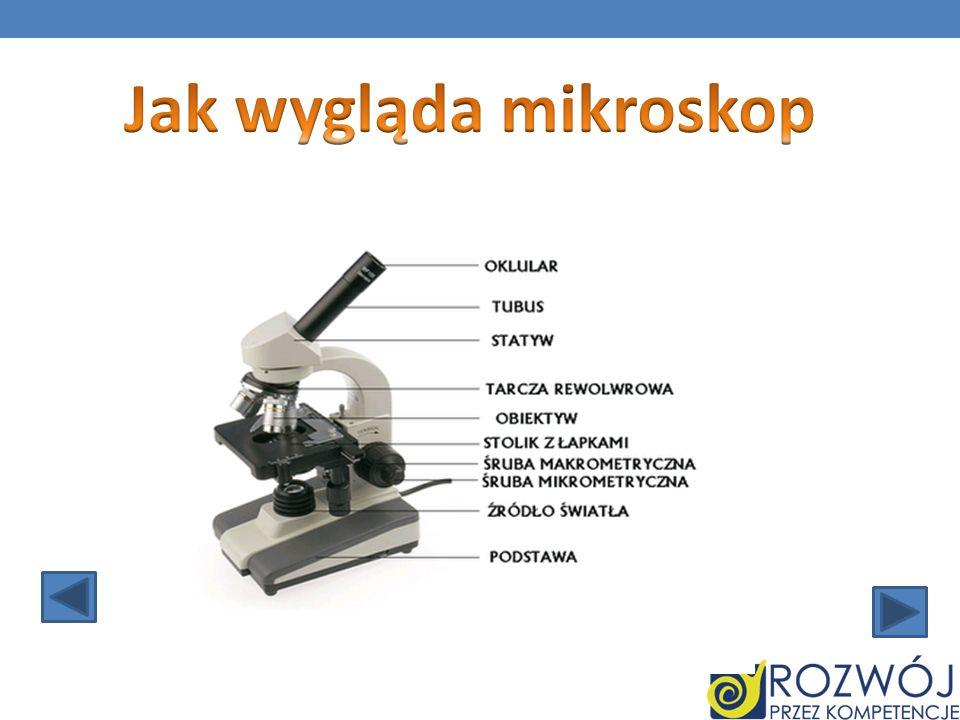 Jak wygląda mikroskop